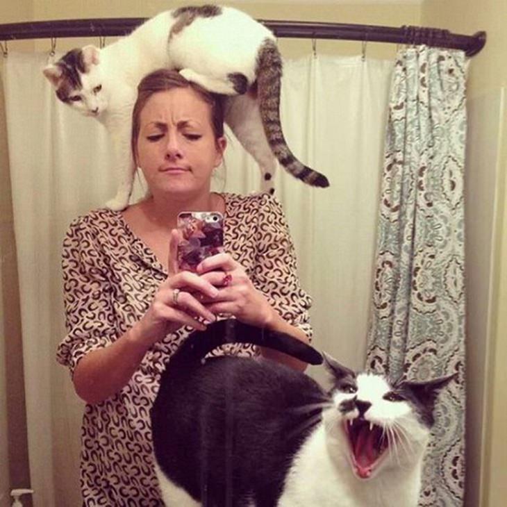 gatos odian sefies