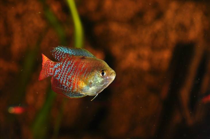 peces hermosos
