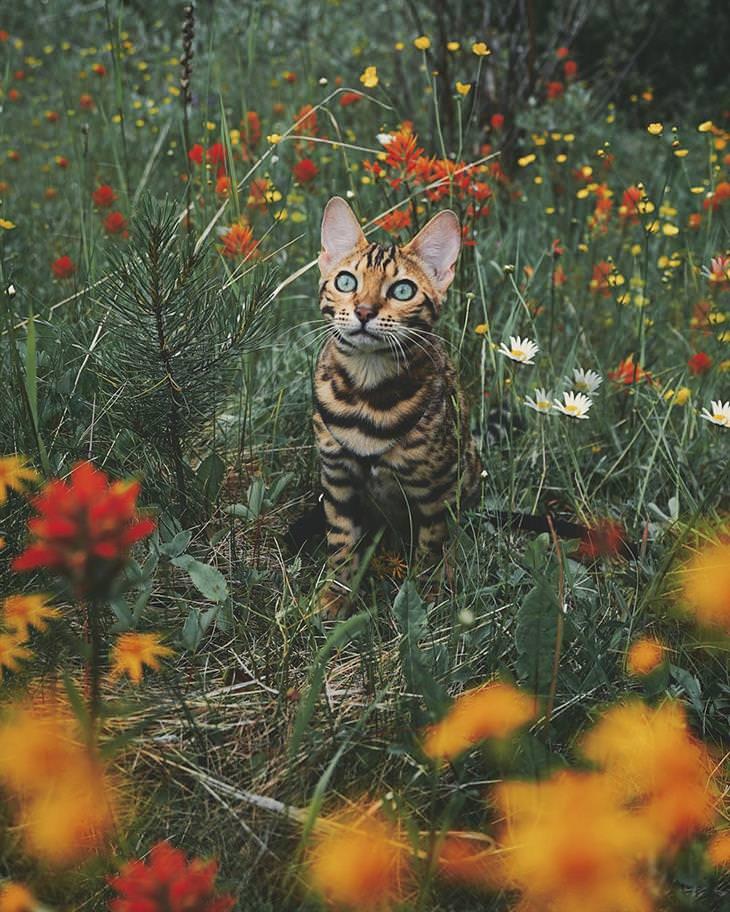 fotos gato viajero Suki
