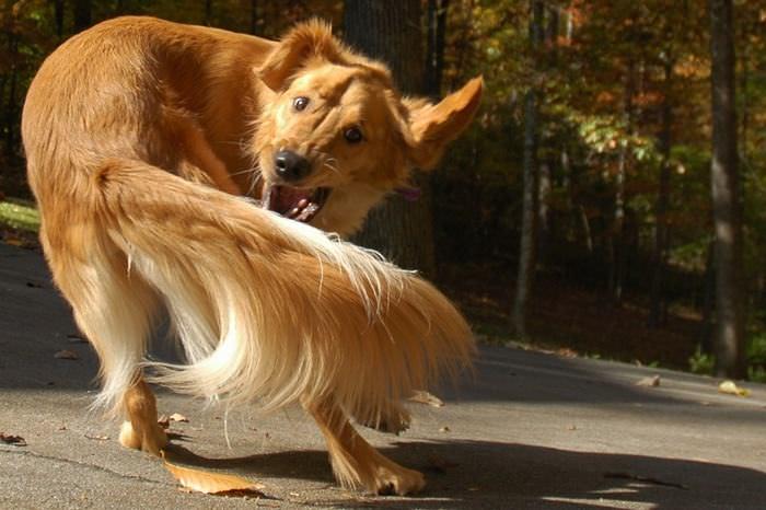 20 curiosidades perros