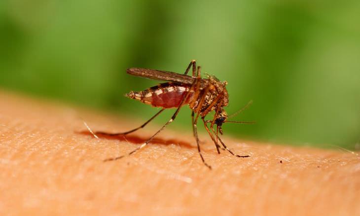 picaduras mosquitos