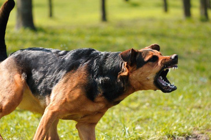 11 síntomas enfermedad mascotas