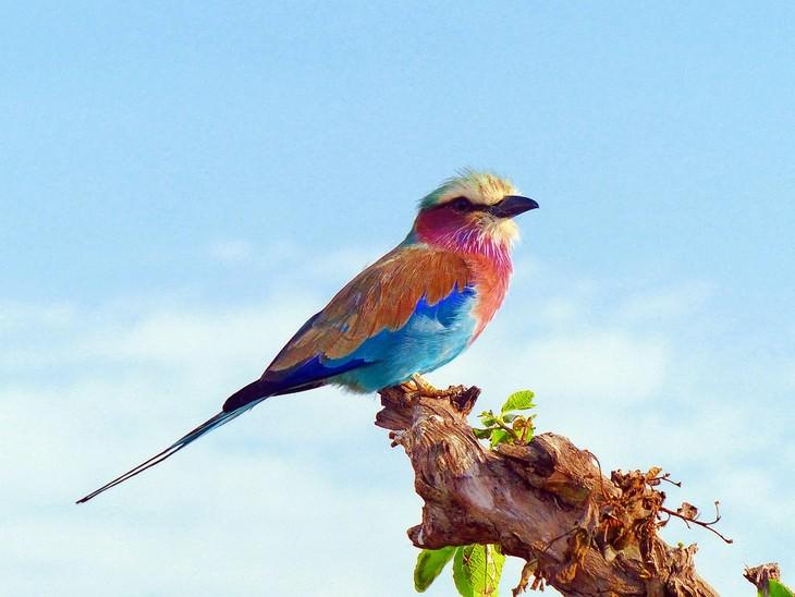 14 exóticas aves