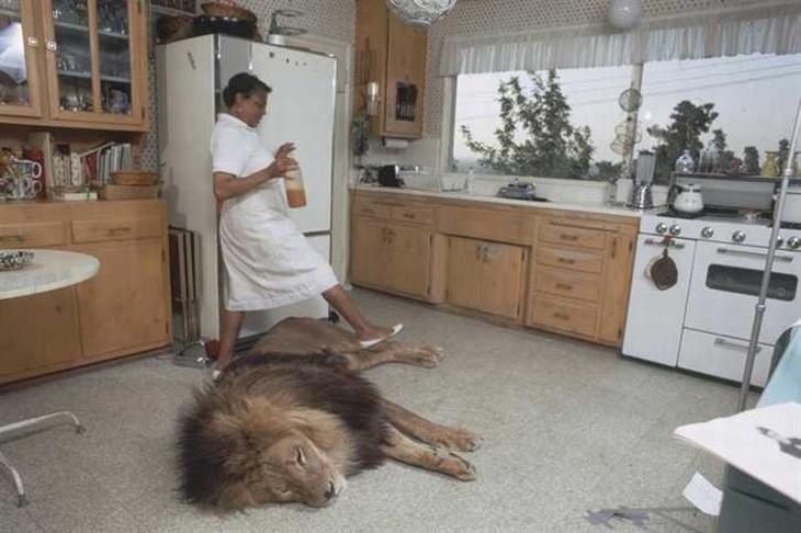 León Casa Mascota