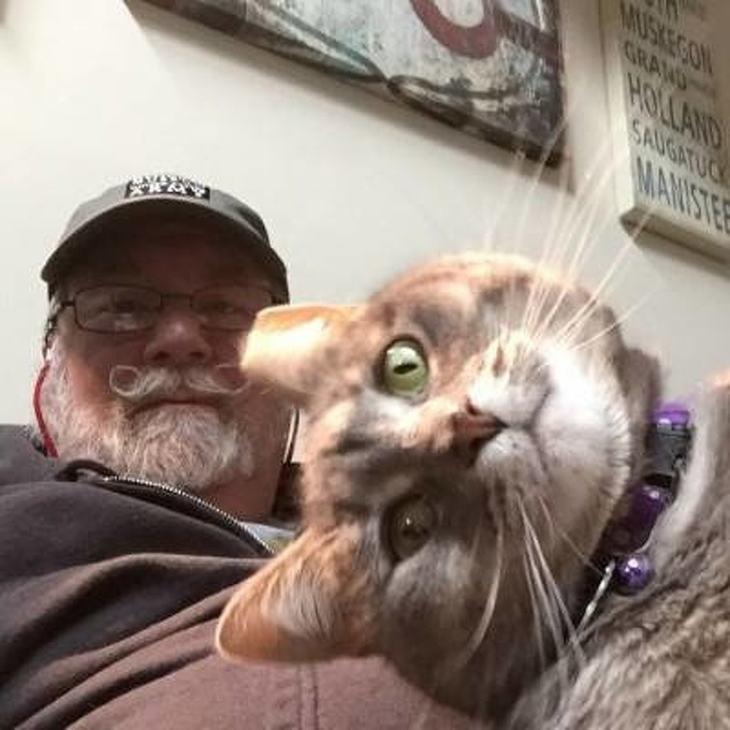 20 Selfies de gatos