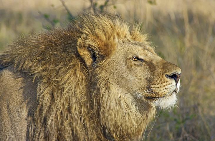 historia león