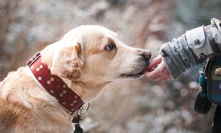 comportarse con perros
