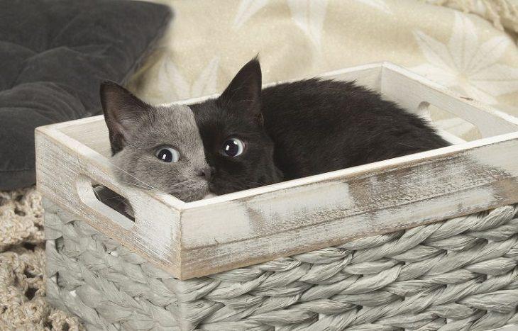 narnia gato dos caras
