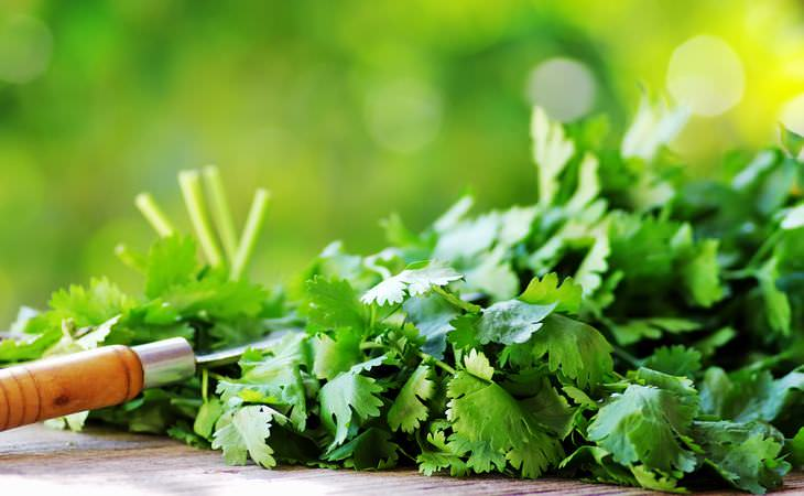 beneficios cilantro