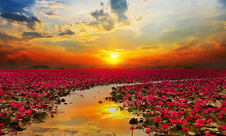 flor de loto todo lo que necesitas saber