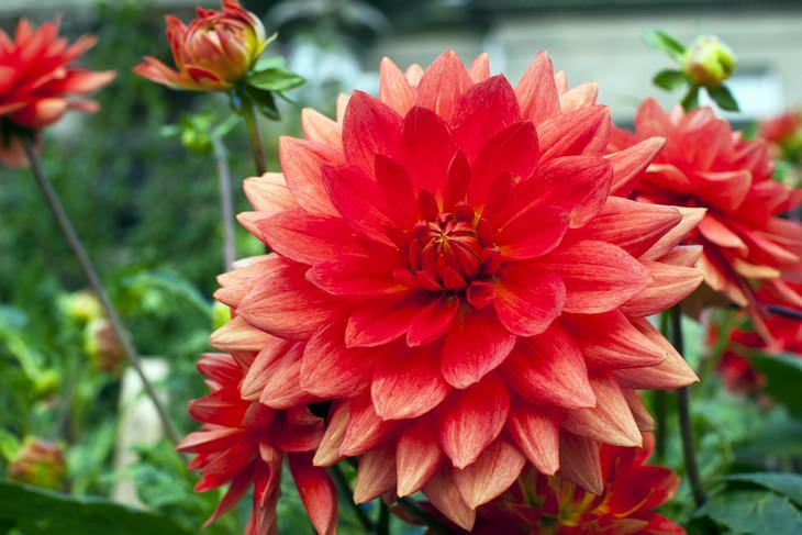 flores más hermosas