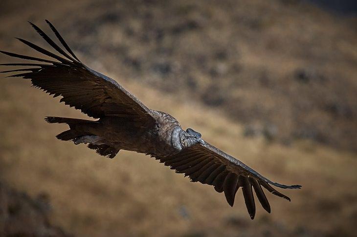 aves vuelo alto