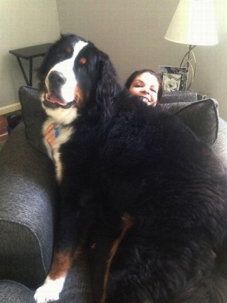 18 perros grandes