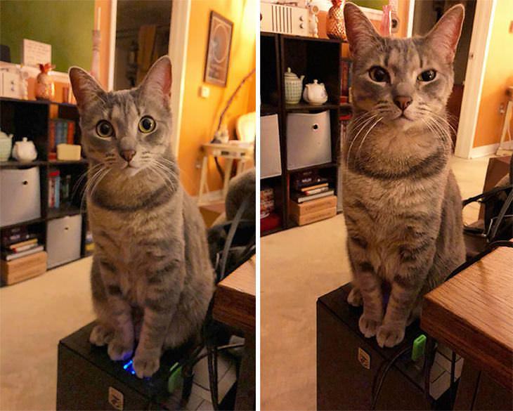 gatos perversos