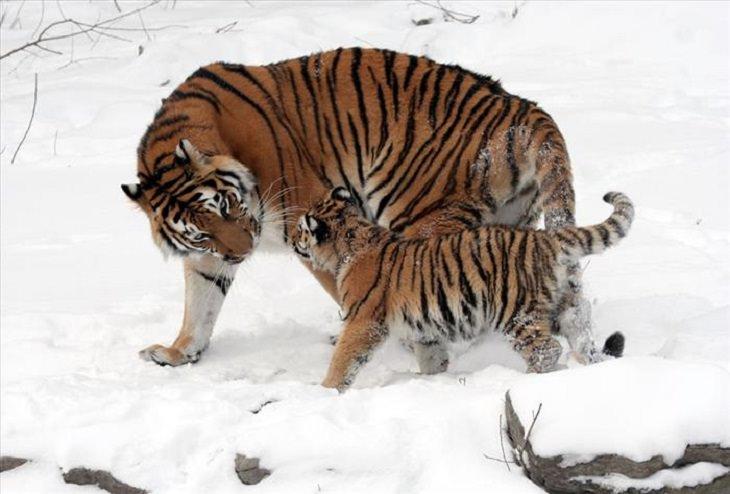 animales en el reino animal
