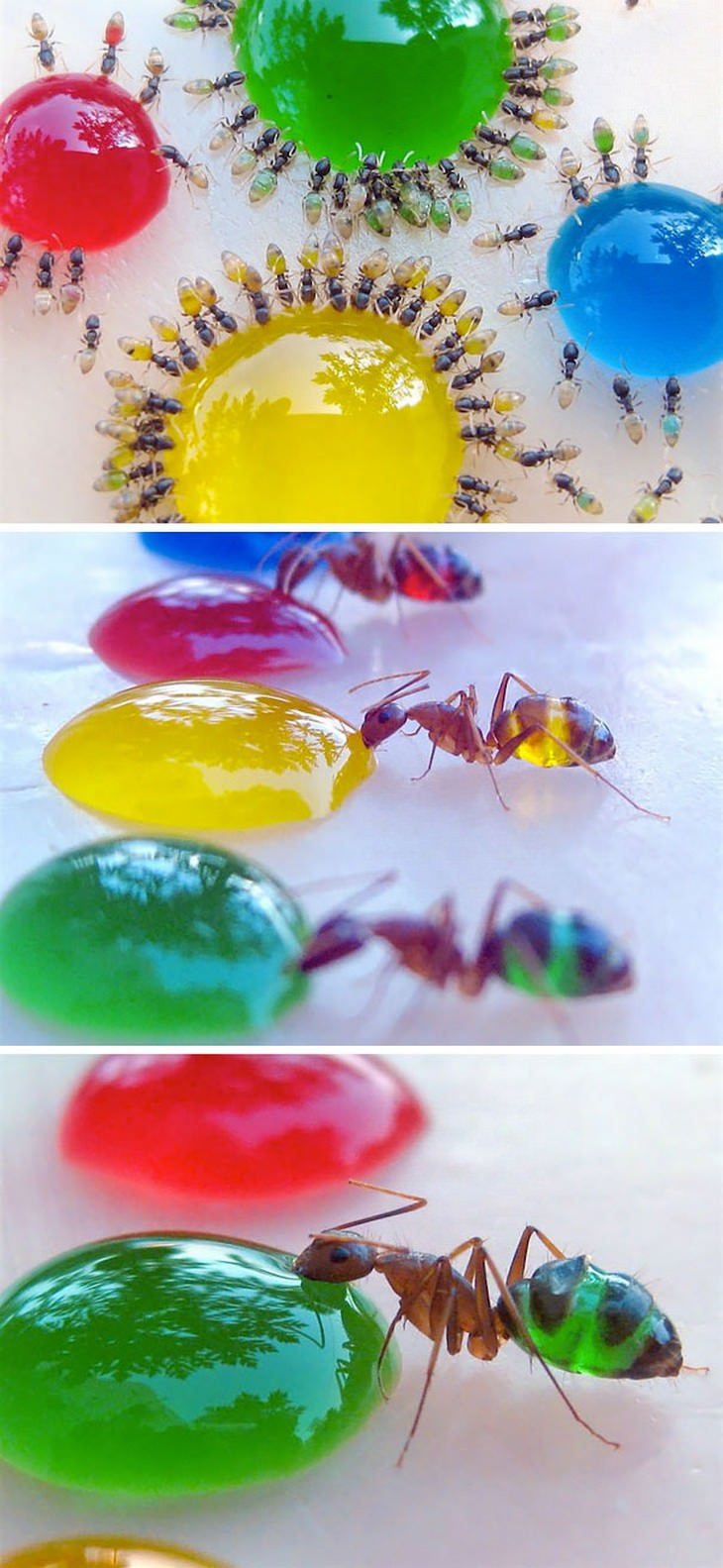 animales transparentes