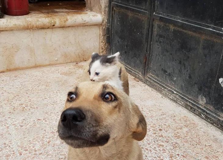 extraños amigos