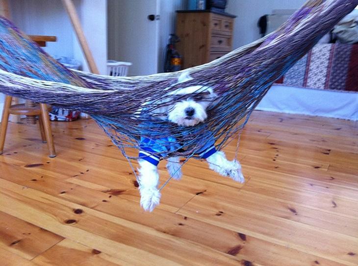 divertidas equivocaciones de perros