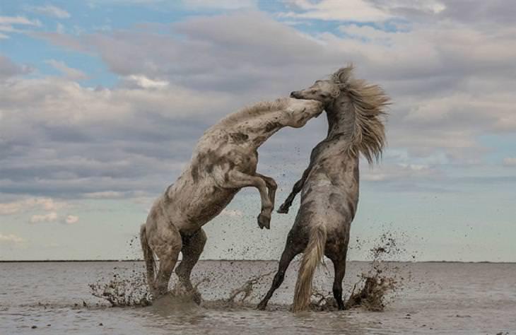 fotos ganadoras concurso fotografía naturaleza