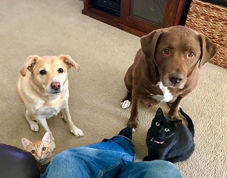 perros pidiendo divertidos