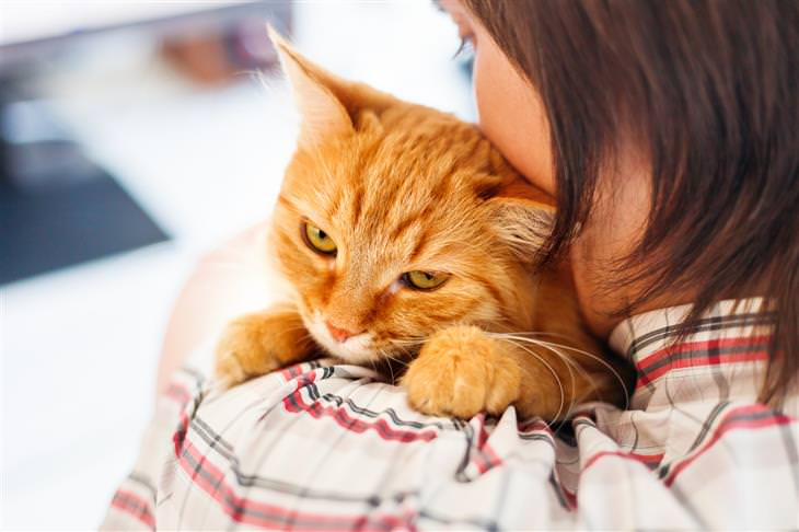 20 cosas gato no gustan