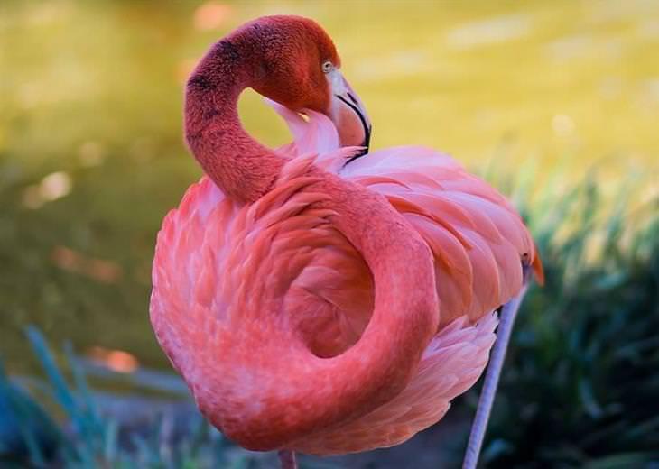 hermosas fotos flamencos