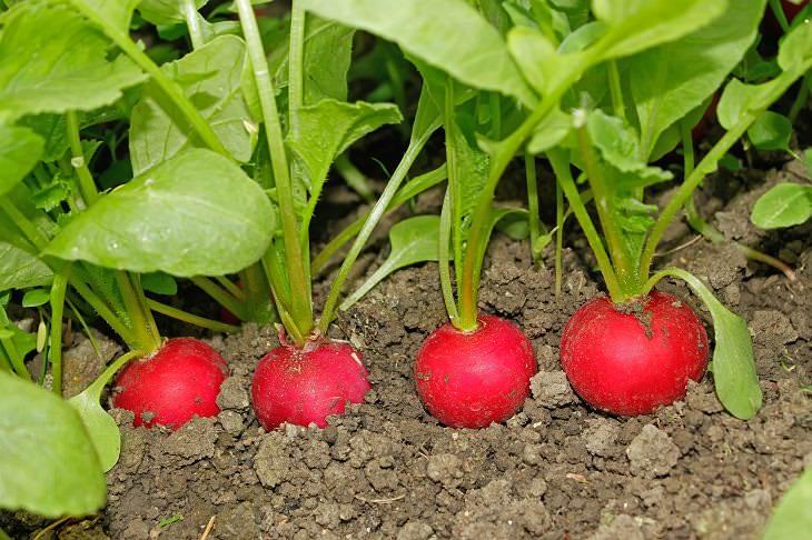 consejos cultivar huerto