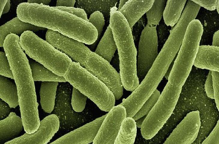 sistema inmune comidas
