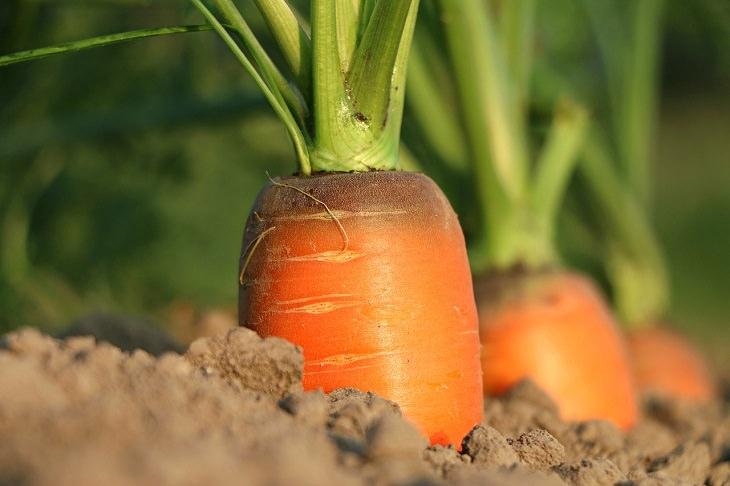 ricos en nutrientes