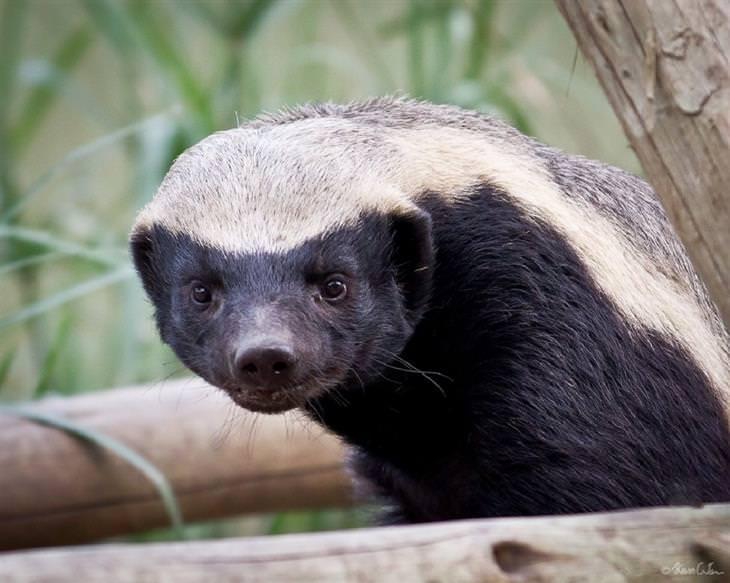 Estos Animales Pueden Ser Lindos, Pero Pueden Ser Mortales