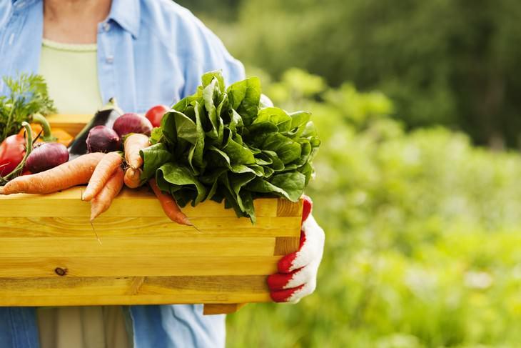 beneficios jardinería