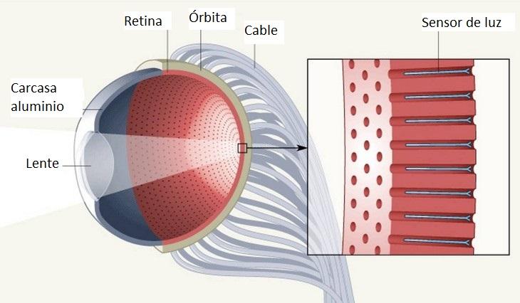Se Crea Un Ojo Artificial Que Podría Acabar Con La Ceguera