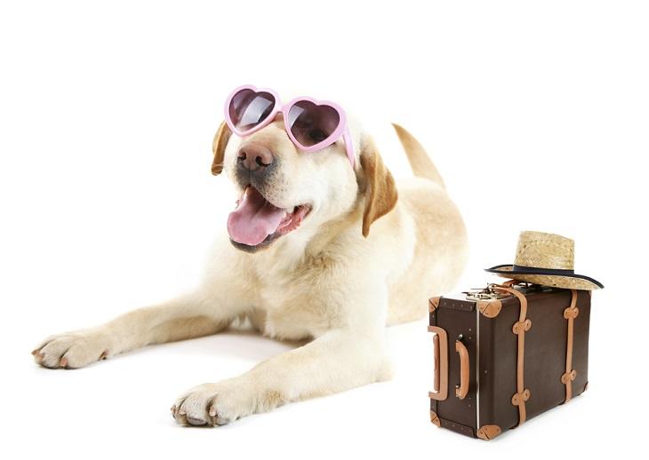 el perro labrador policía