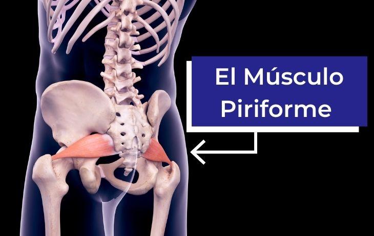 Explicación del dolor piriforme