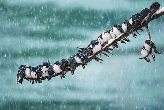 Animales Invernales