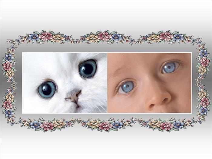 parecidos entre humanos y animales