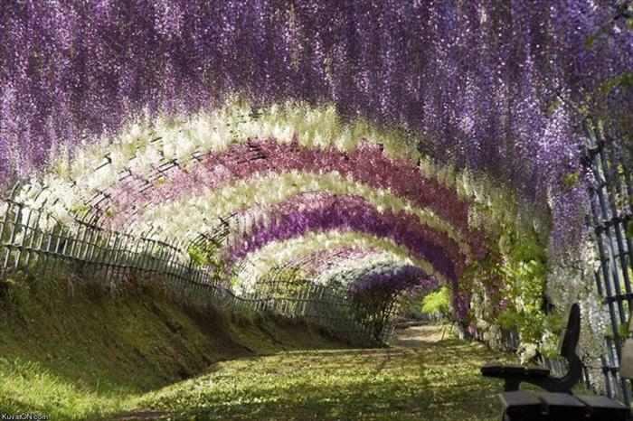 imágenes del Parque de Las Flores Ashikaga
