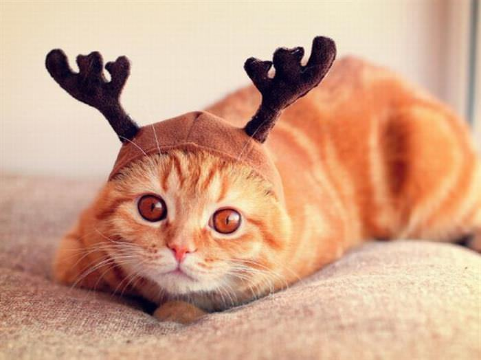 Gatos Con Sombrero