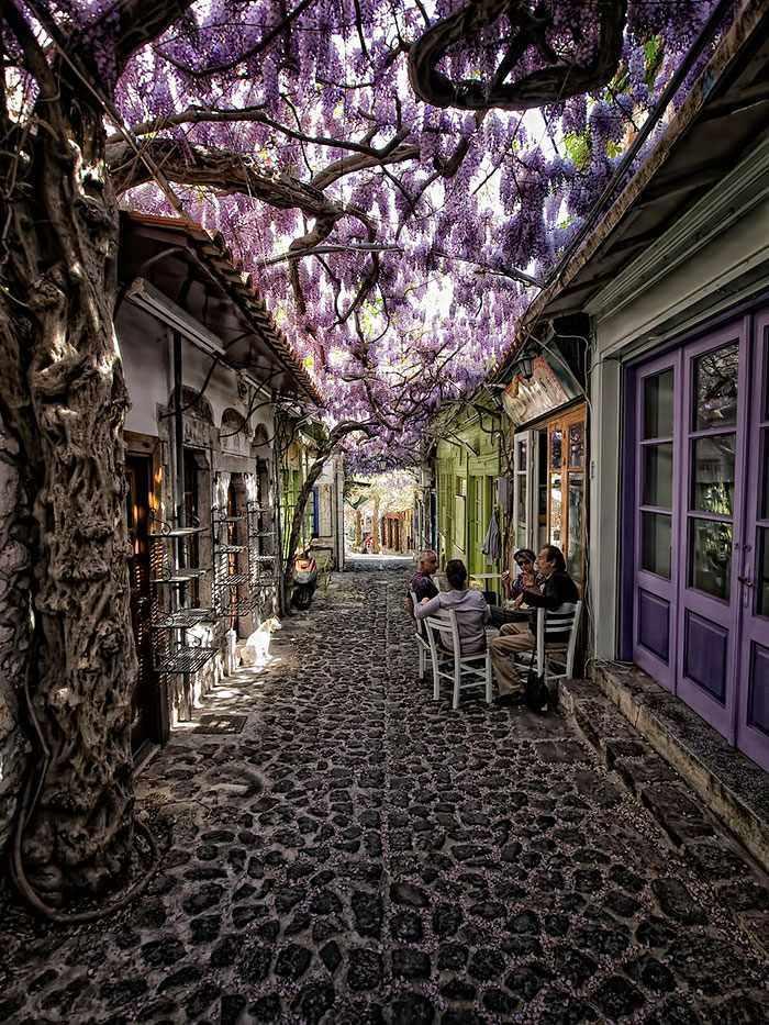 Calles florales