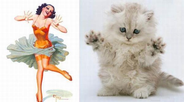 gatos modelos