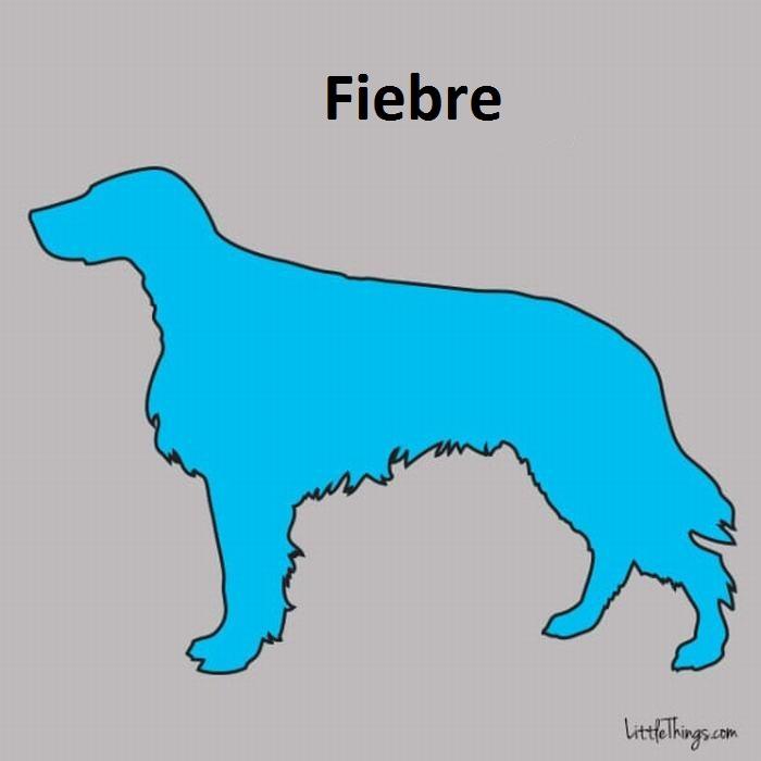 Guía De La Salud Para Tu Perro