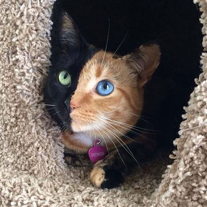 Ojos Muy Especiales