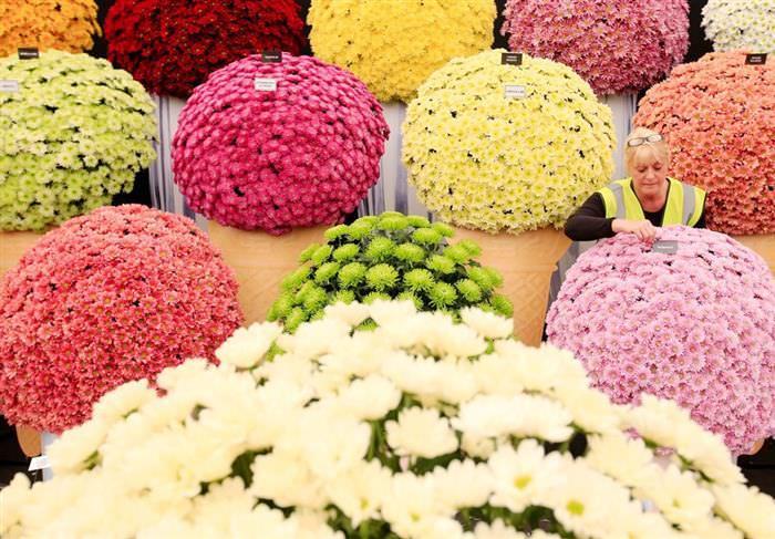 Festival de Flores