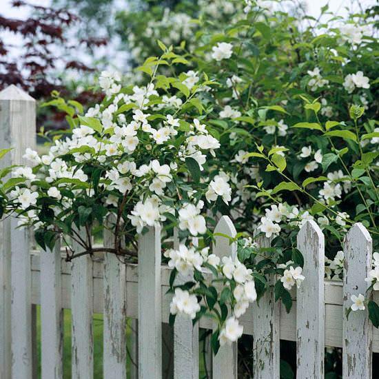 Arbustos florales