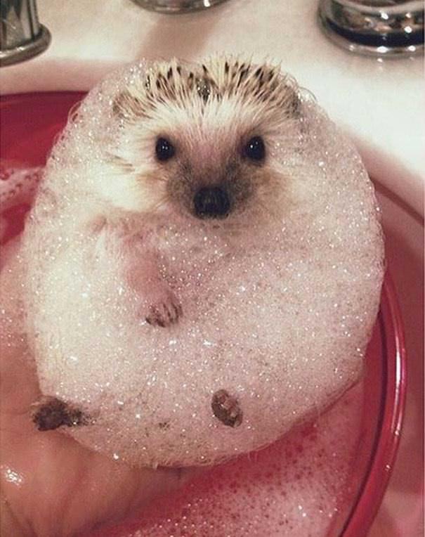 Animales baño