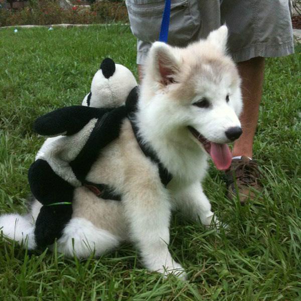 Mascotas con Mochilas