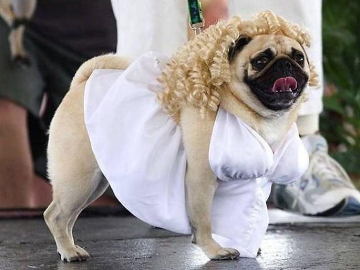 perrros disfrazes haloween