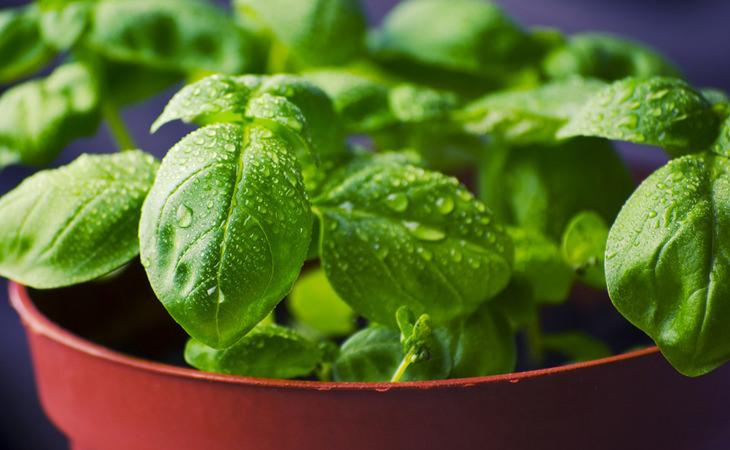 10 alimentos que no debes refrigerar