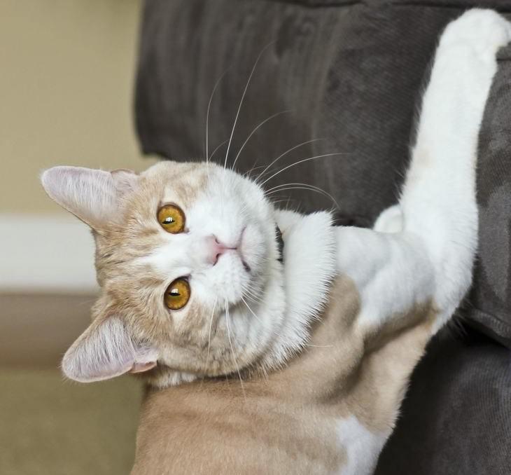 11 cosas que tu gato quiere decirte