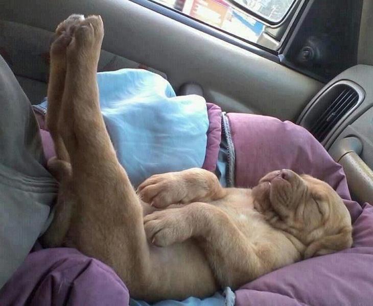 fotos cachorros durmiendo